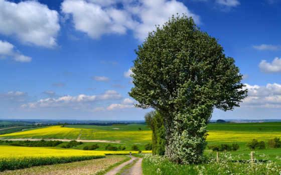 небо, поля, trees, clouds, тропинка, горы, графики, природа, дизайна,