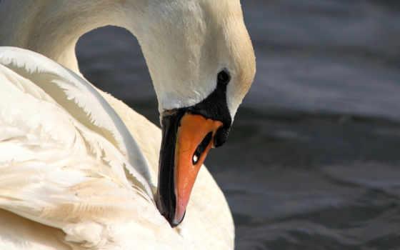 you, птица, juneberry, birds, шея, tickets,