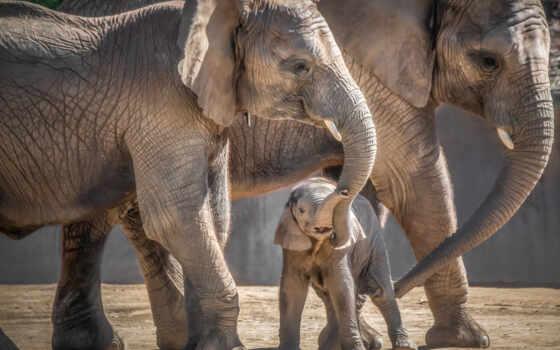 слон, puzzle, baby, jigsaw, решить, game, семья