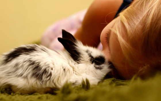 кролик, девочка, кролики