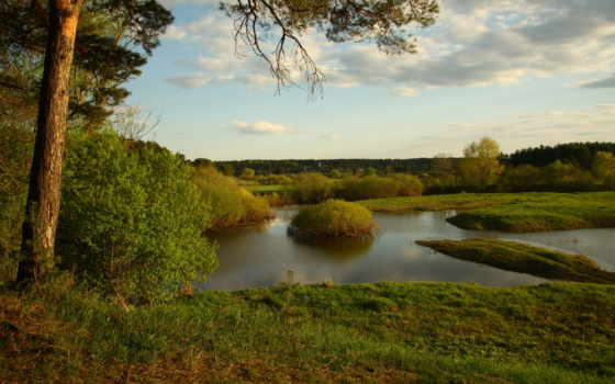 река, pine, природа