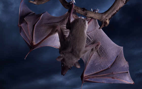 bat, mouse, мыши