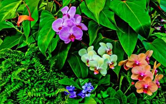 tapety, letöltése, storczyki, full, орхидея, háttérkép, цветы, znajdziesz,