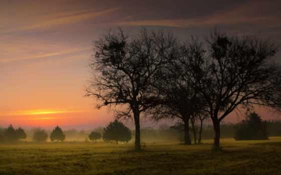 раннее, утро, туман, trees, поле, широкоформатные, лес, рассвет,