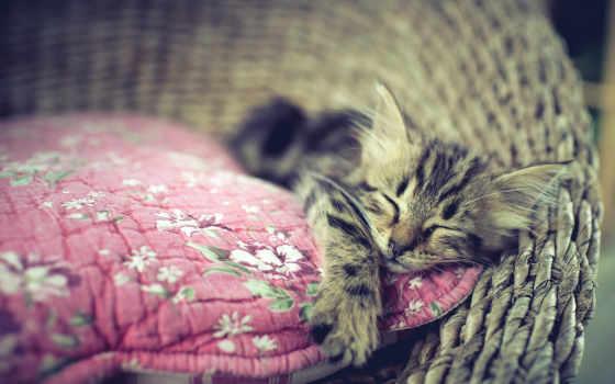 кот, cats, кошки, dreams, сладкое, kitty, животных, спит, пушистики, разные, dream,