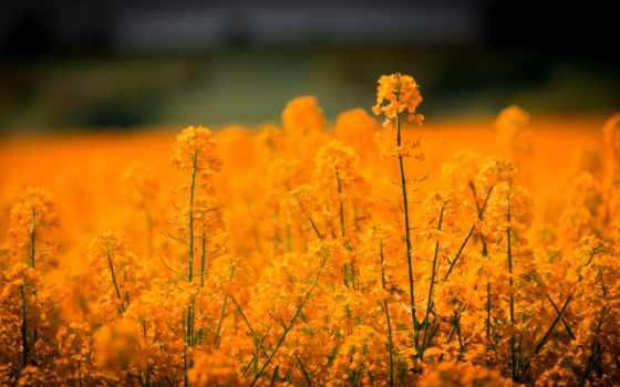 оранжевый, природа, fleur, summer, été, чемпион, цветы, daylily, plan, большой,