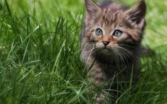 котенок, кот, котята, кошки, small, zhivotnye, martha, милые, red, картинка,