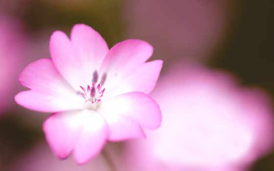 макро, цветок Фон № 7976 разрешение 1920x1200
