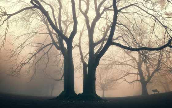 tree, druid, сумерки, туман, greg, similar, martin, tags, cars, trucks, природа,