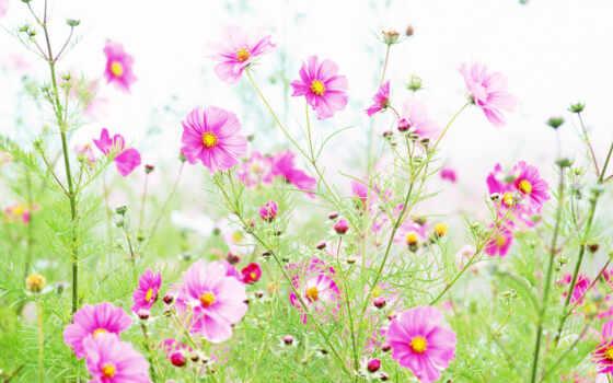 cvety, сегодня, цветочки