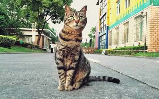 серый кот Фон № 97338 разрешение 2048x1280