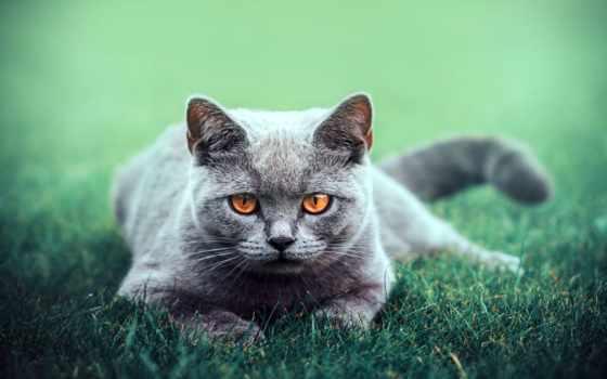 кот, янв, коллекция