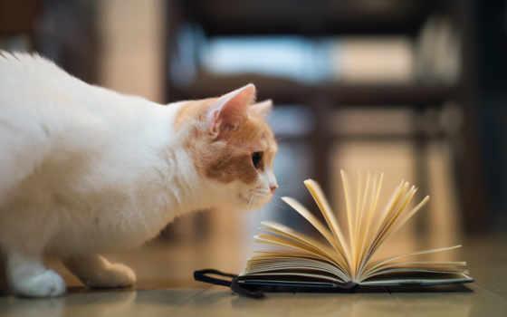 кот, книга, curiosity