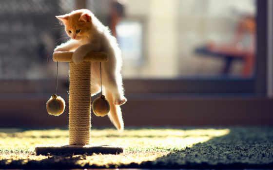 купить, кошек, кошки