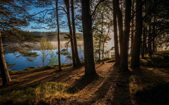 шотландия, лес, kinrara, англия, trees, rivers, великобритания, природа,