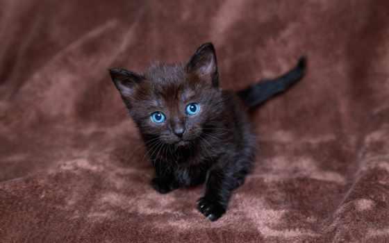 occhi, gattino, gato, nero, dagli, neri, ди, azzurri, olhos, blu, котенок,