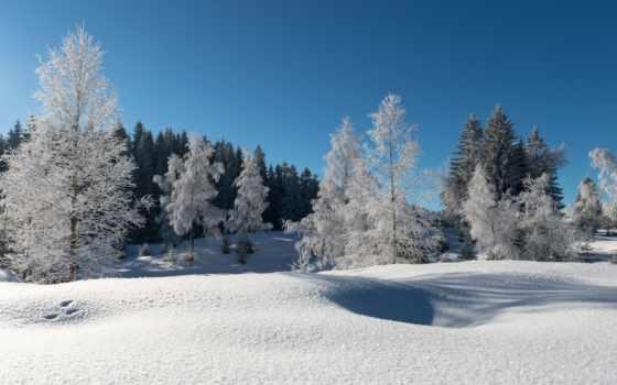 иней, лес, winter, снег, trees, небо, синее,