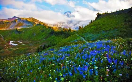 весна, луг, цвета, desktop, цветы, flowers, навахо, this,