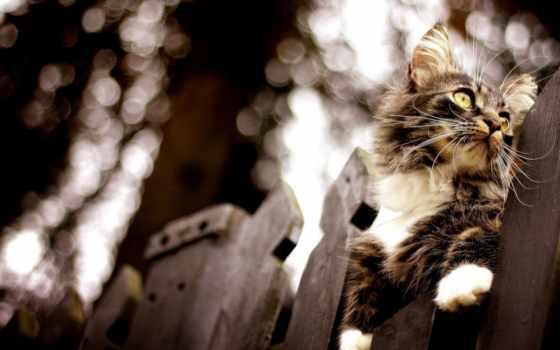 домашних, кошек, каждая