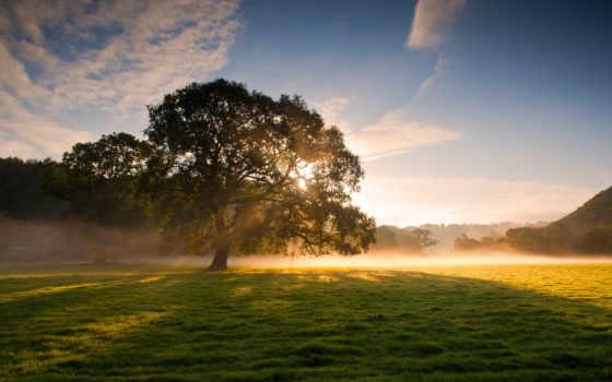 природа, дерево, природы, хорошем, трава, картинка, поле, sun, rays,