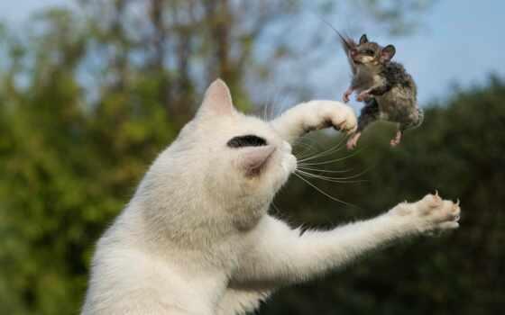 mouse, кот, hunting, comics, white, комментарий, berkut, tsha, ikigat