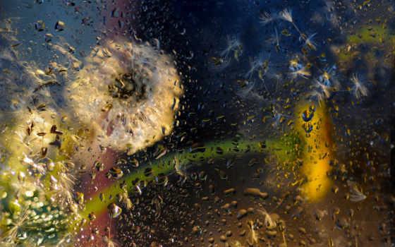 дождь, desire, капли, steklo, cvety, рисунки,