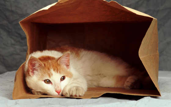 кот, red, package