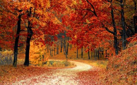пасть, листья, leaf, осень, листва, тона, color, are,