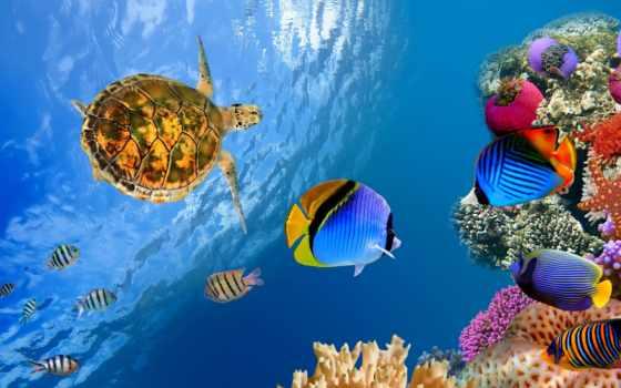 diving, maldives, мальдивах, острова, мальдивские, ari, самое, атолл, дайверов, островах,