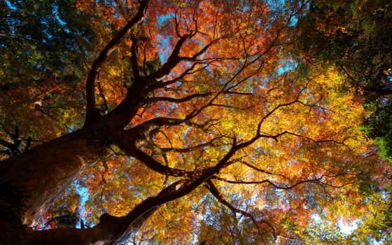осень, природа, trees, листва, кроны,