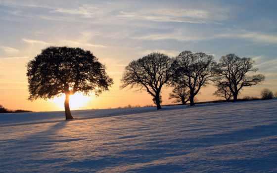 drzewa, słońce, nieg, zachodzące, pulpit, солнца,