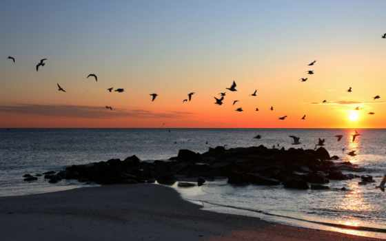 птицы, закат, море
