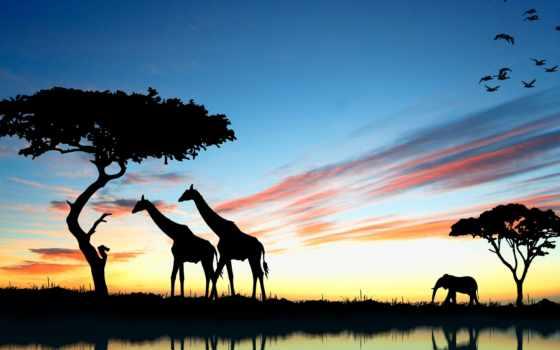 жирафы, анимации, закате, жираф, смайлики, закат, гифки, рисунки, слон, открытки, африка,