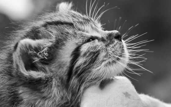 котенок, pet, кот