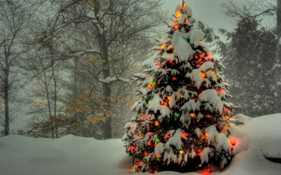 снег, елка, гирлянды, огни, лес, зимний, цветные, год, новый,