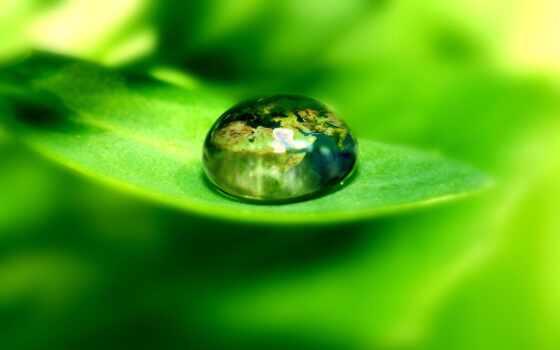 drop, росы, капли