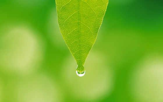 зеленый лист и капля