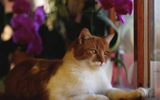 zhivotnye, кошки, коты Фон № 86450 разрешение 3840x2160