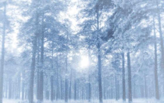 снег, winter, деревя, лес, сосны, идёт, иней,
