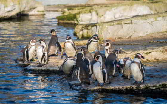 пингвины, zhivotnye, категории
