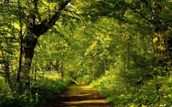 лес, зелёный, summer, тропинка, trail, live, разных, разрешениях,