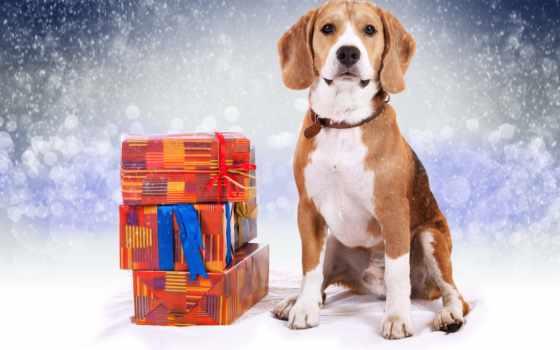 одежда, beagle, мужская, изображение, насчитывающей, интернет, магазин, популярных, горячих,