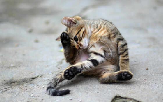 animal, кот, sweetheart, cute, small, котенок, планшетный, тема
