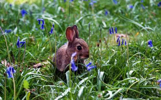 кролик, цветов, разных