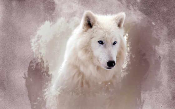 волк, white, волки