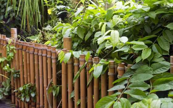 природа, бамбук, widescreen, bambu, search, arka, zobacz, страница, full,