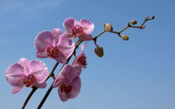 орхидея, орхидеи, branch, цветы, pictures, pin, веточка, striped,