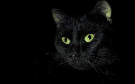 кот, черная, кошки, black, свет, собаки, зеленые,