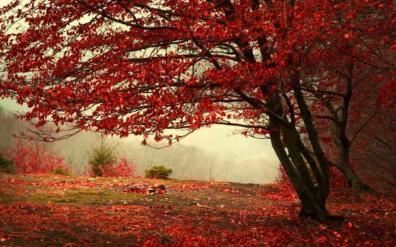 осень, листва, красные, дерево, туман, hill, лес, trees, ветки, бордовые, природа,