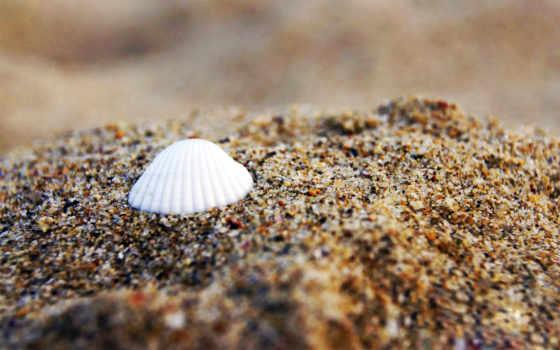 shell, vee极客j, пляж, free, nefrina, песка, браун,
